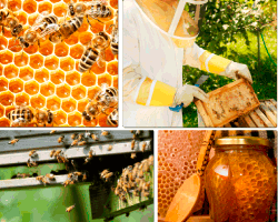 Apensar apicultor
