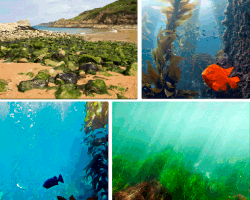 apensar fondo del mar con peces