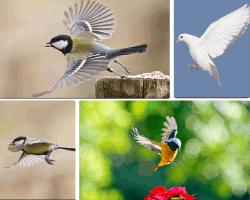 Apensar pájaros volando paloma volando