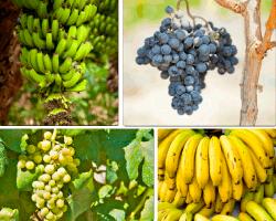 apensar plátanos uvas