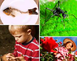 Apensar hormiga