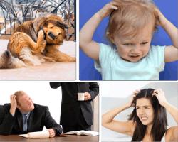 Apensar perro rascándose