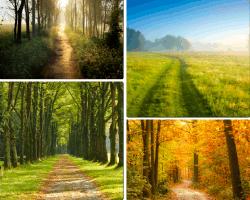 apensar bosque