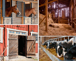Apensar caballos vacas