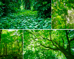 apensar vegetacion
