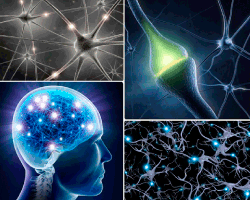 apensar neuronas cerebro