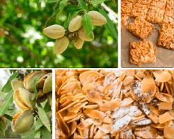 Apensar frutos en árbol