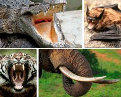 apensar cocodrilo