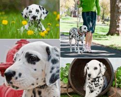 apensar perro blanco y negro