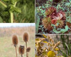 apensar plantas germinando