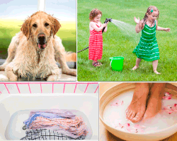 apensar perro mojado