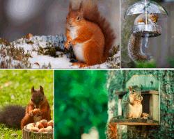 apensar ardilla nido