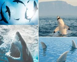 apensar imagenes de ballenas