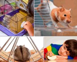 apensar raton nino