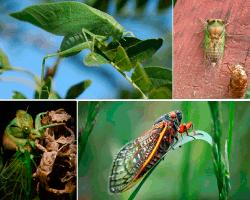 apensar insectos en ramas
