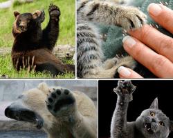 Apensar oso