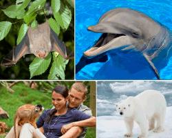 apensar delfin