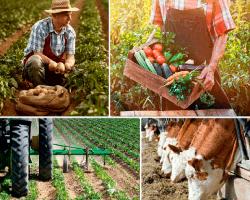 apensar hombre cosechando papas