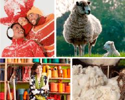 Apensar oveja