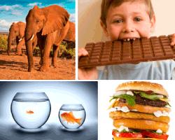 Apensar elefantes