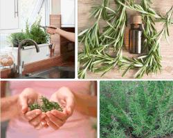 Apensar plantas medicinales
