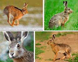 Apensar conejo saltando