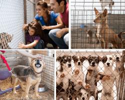 Apensar perros en jaulas