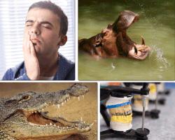 Apensar hipopótamo con la boca abierta