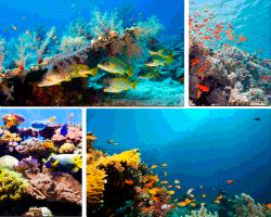 apensar peces en el fondo del mar