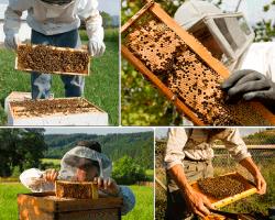 apensar panal abejas