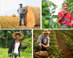 Apensar agricultor