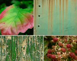 Apensar hoja verde y morada