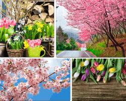 apensar macetas con flores