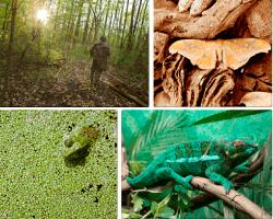 apensar camaleon verde