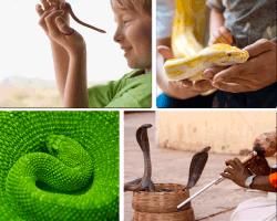 apensar reptiles