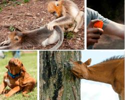 apensar monos
