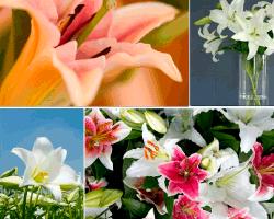 apensar flores petalos