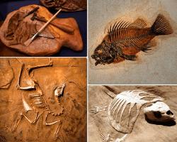 apensar esqueleto de pescado