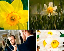 Apensar flores amarillas y blancas