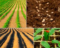 Apensar cultivos agricolas