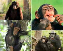 apensar mono riendo