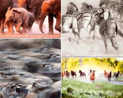 apensar elefantes y cebras corriendo