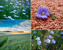 apensar campos de flores
