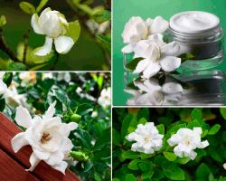 apensar flores blancas