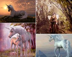 apensar caballo blanco